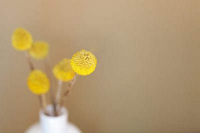 Yellow seed heads in small white vase